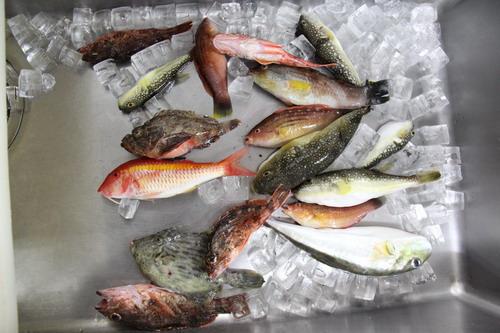 今日は7目釣り。カワハギが少ない。_f0175450_16205890.jpg