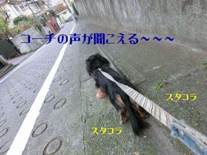 b0222559_1950407.jpg