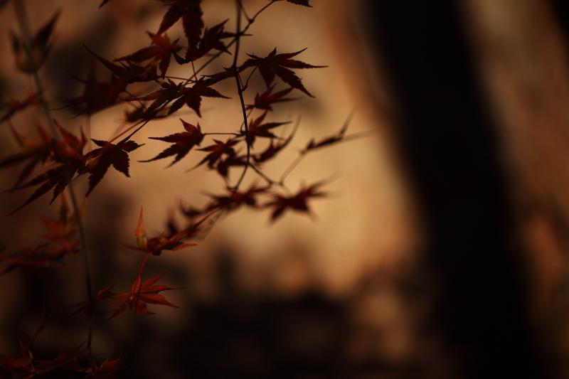 鍋倉山の色_e0183063_1617265.jpg