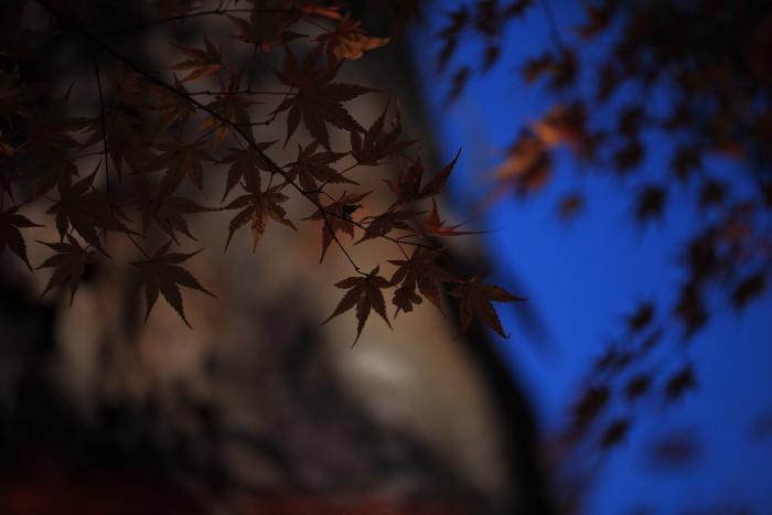 鍋倉山の色_e0183063_16175045.jpg