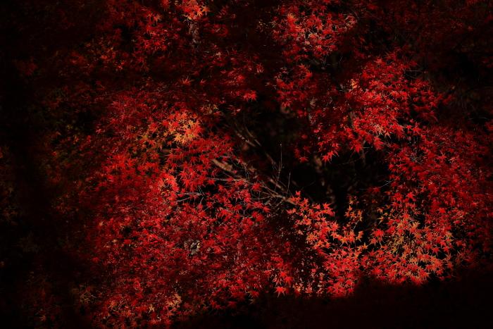 鍋倉山の色_e0183063_1618968.jpg