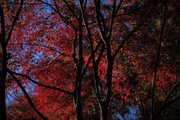 鍋倉山の色_e0183063_1619034.jpg