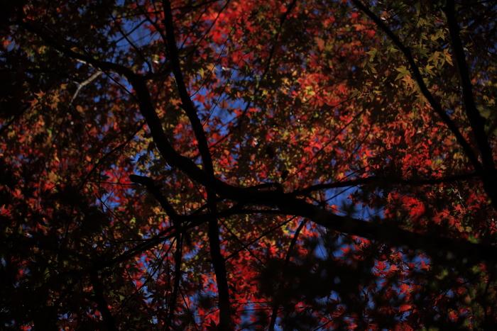 鍋倉山の色_e0183063_16192735.jpg