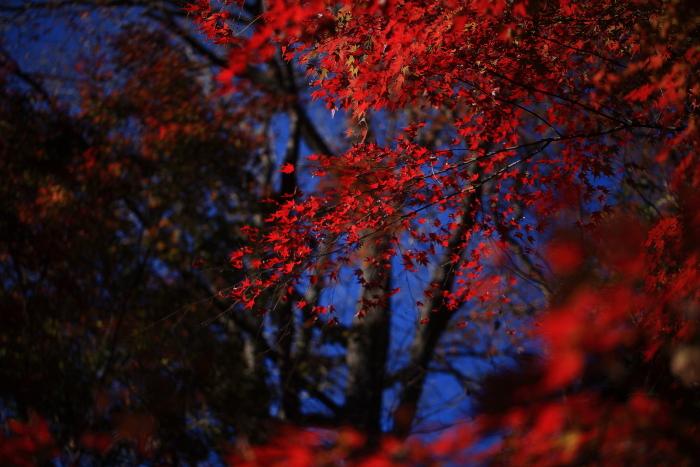 鍋倉山の色_e0183063_16205562.jpg