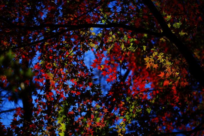 鍋倉山の色_e0183063_16211631.jpg