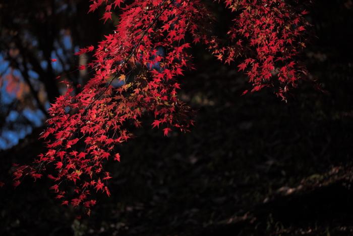 鍋倉山の色_e0183063_16222449.jpg