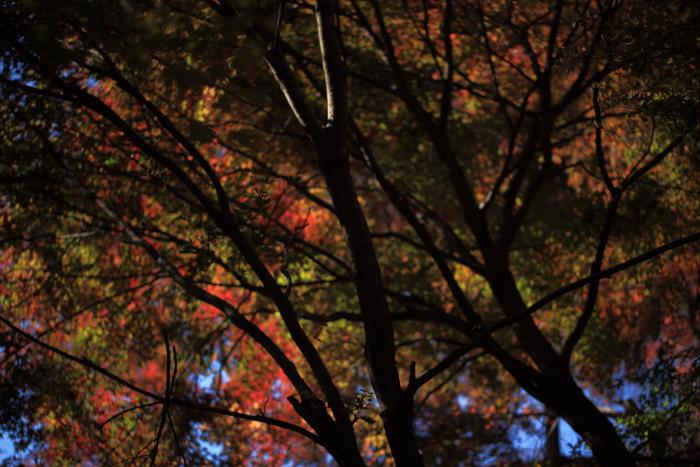鍋倉山の色_e0183063_1622622.jpg