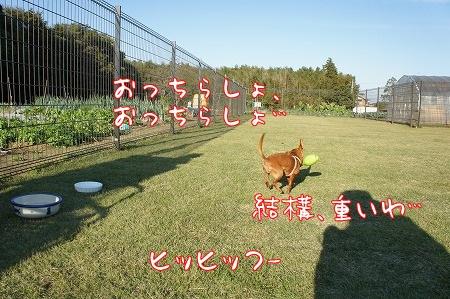 ドッグラン&カフェ・フェリスタス@阿見・ひたちの牛久_a0091865_10462065.jpg