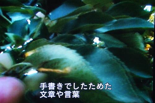 b0194405_1014133.jpg