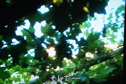 b0194405_1017444.jpg