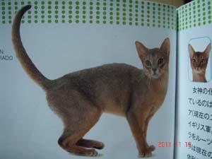 日本と世界の猫カタログ2012年_e0033609_1622157.jpg