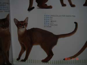 日本と世界の猫カタログ2012年_e0033609_1624572.jpg