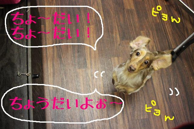 b0130018_0523626.jpg