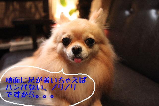 b0130018_161676.jpg