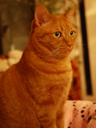 ぐぅーすかぴぃー猫 しぇる編。_a0143140_2325691.jpg