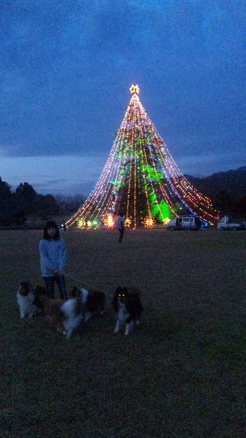 クリスマスツリー_f0126965_859234.jpg