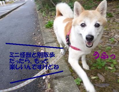 a0154801_1723321.jpg
