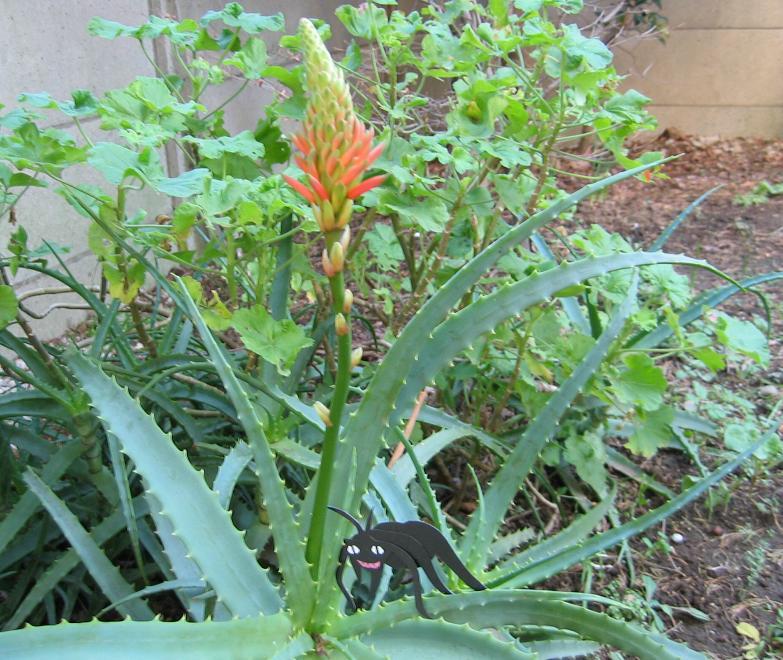 昆虫と植物の関係_b0203907_11424065.jpg