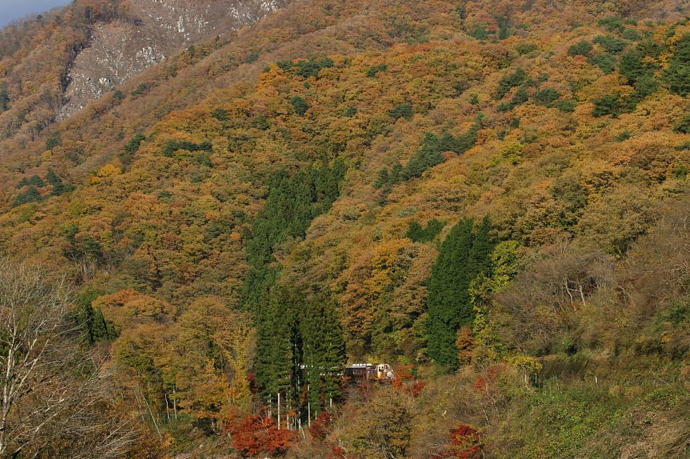 炎 - 2011年秋・わたらせ -_b0190710_2271818.jpg