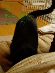 b0200310_10503685.jpg