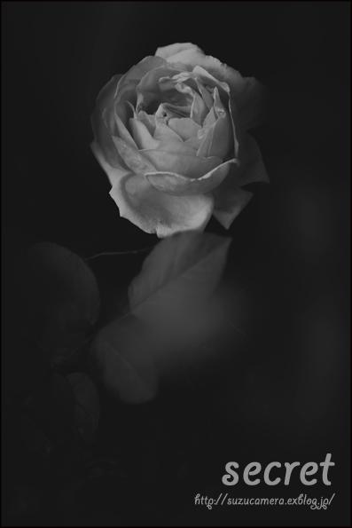 バラの下で_f0100215_2347634.jpg