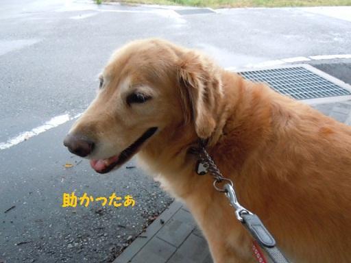 f0114128_9491315.jpg