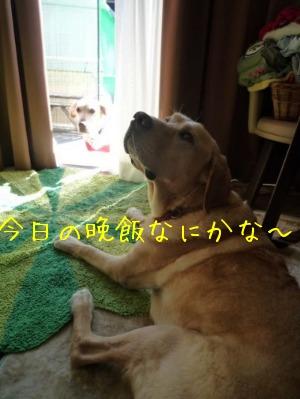 f0177261_14152132.jpg