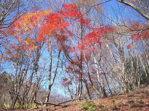京都 北山の秋 2011年_a0164068_1802473.jpg