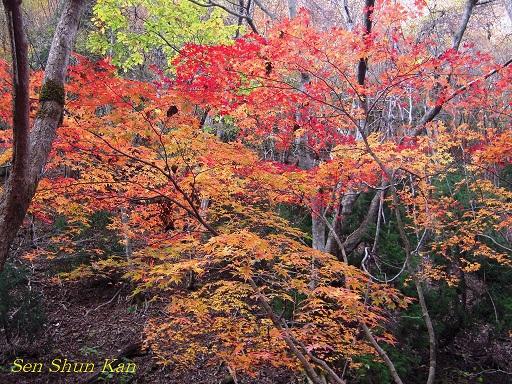 京都 北山の秋 2011年_a0164068_182577.jpg