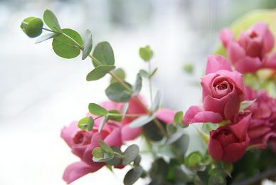 ユーカリの香り_f0202682_16475961.jpg