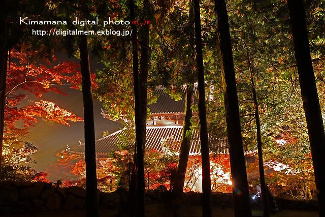 宝福寺ライトアップ Scene2_c0083985_17135913.jpg