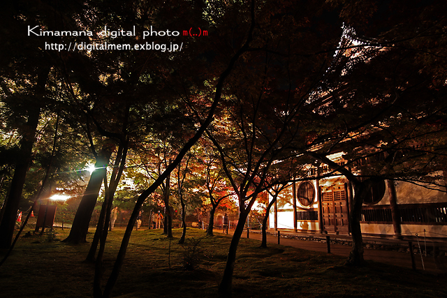 宝福寺ライトアップ Scene2_c0083985_1713936.jpg