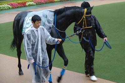 不良馬場も問題なしの圧勝!東京スポーツ杯2歳Sはディープブリランテが2連勝で重賞初制覇_b0015386_0224269.jpg
