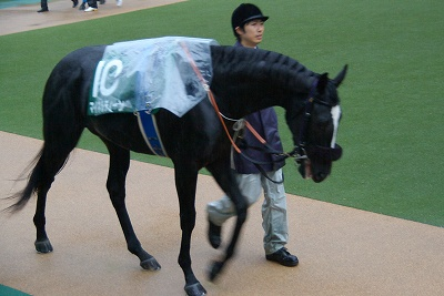 不良馬場も問題なしの圧勝!東京スポーツ杯2歳Sはディープブリランテが2連勝で重賞初制覇_b0015386_024495.jpg