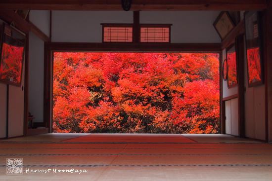 秋色_b0208495_22482633.jpg
