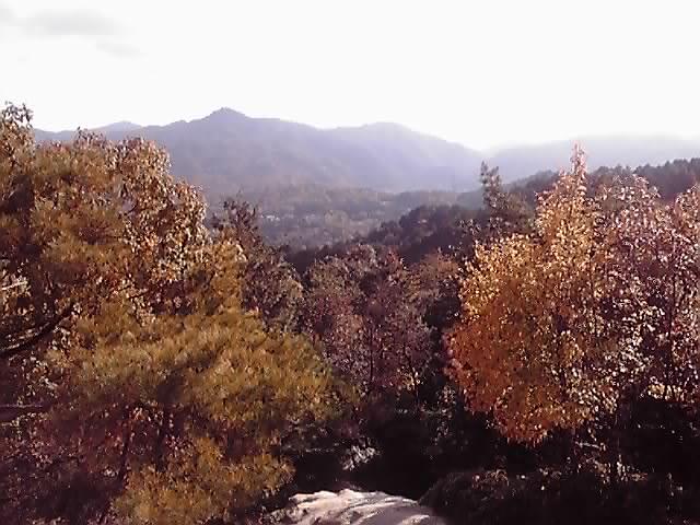 林業その2_e0037600_214594.jpg