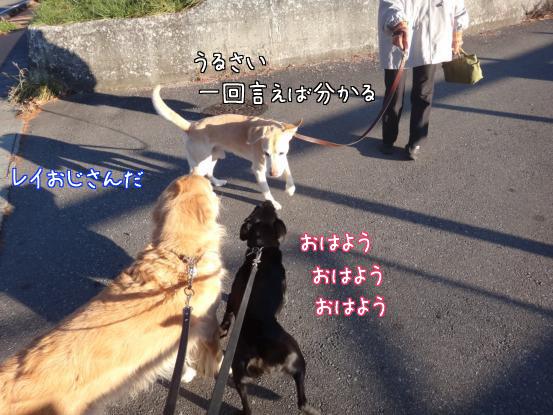 朝寝坊のえっちゃん_f0064906_1731195.jpg