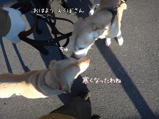 朝寝坊のえっちゃん_f0064906_17331793.jpg