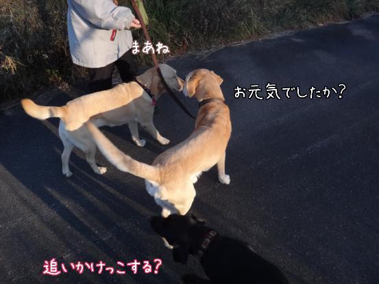 朝寝坊のえっちゃん_f0064906_17332322.jpg