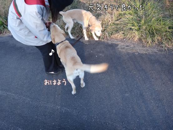 朝寝坊のえっちゃん_f0064906_17333475.jpg