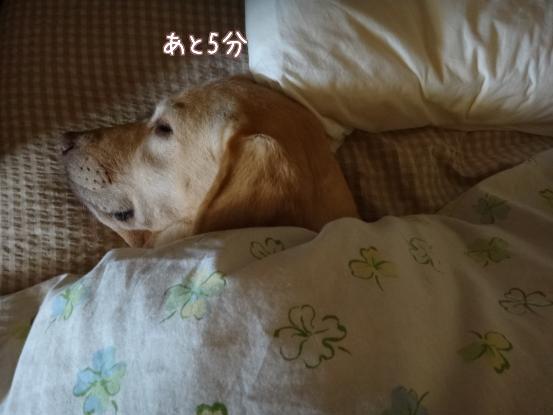 朝寝坊のえっちゃん_f0064906_17374767.jpg
