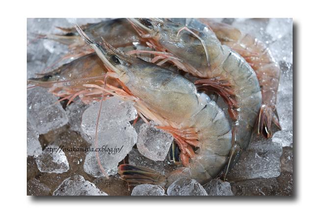 猿蝦(海老)/サルエビ ................ 芝海老と同じように料理してOK! : 魚屋三代目日記