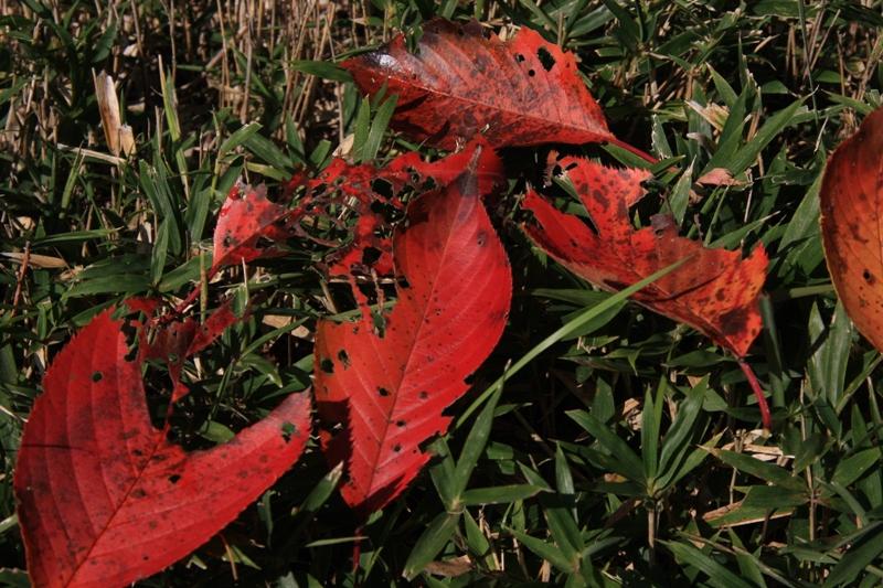 autumn leaves(広島編)_b0190540_14535152.jpg