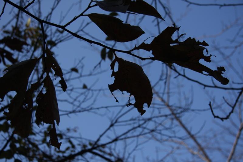 autumn leaves(広島編)_b0190540_1454366.jpg