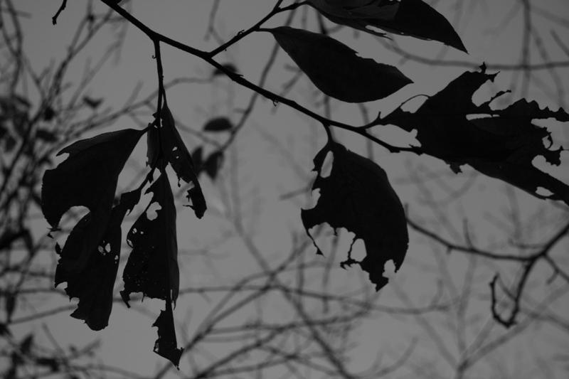 autumn leaves(広島編)_b0190540_14545066.jpg
