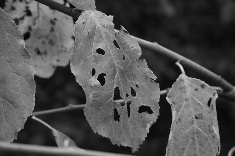 autumn leaves(広島編)_b0190540_1455197.jpg