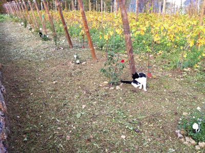 猫を捜して!_d0136540_215512.jpg