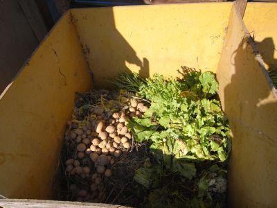 野菜残渣堆肥_c0063348_7273663.jpg