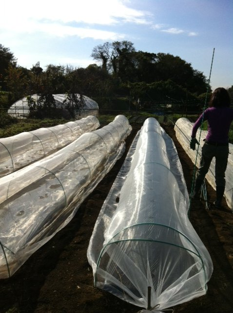 今朝はブロッコリー&カリフラワーのネットを外し・・蚕豆&えんどう豆の畝に_c0222448_16373125.jpg