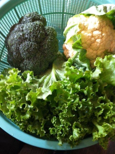 カリフラワー&ブロッコリー収穫始めます・・・。_c0222448_16521938.jpg